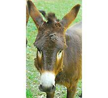 Eeyore The Donkey Photographic Print