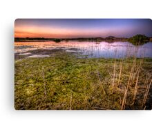 Swamp Sunset Canvas Print