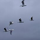 Gulls in a Storm (1) by George Cousins