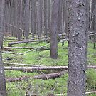 Forest's Floor (colour) by Christopher Clark