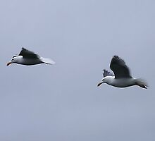 Gulls in a Storm (4) by George Cousins