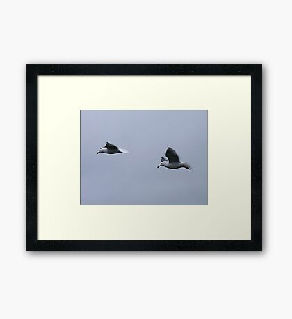 Gulls in a Storm (4) Framed Print