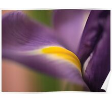 The sensuous iris Poster