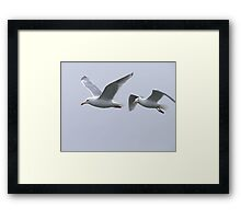Gulls in a Storm (5) Framed Print