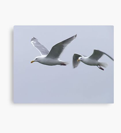 Gulls in a Storm (5) Canvas Print