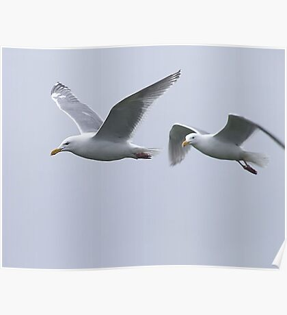 Gulls in a Storm (5) Poster