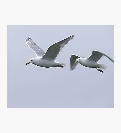 Gulls in a Storm (5) Photographic Print