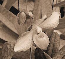 Sepia Orchid  by Rosalie Scanlon