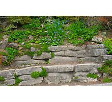 Stone Bench in Spring Photographic Print