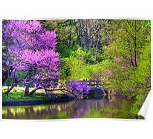 Spring Blossoms On Lake Marmo Poster