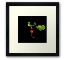 Baby Radish Framed Print
