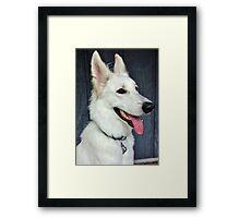 White German Shepherd Dog Portrait Framed Print