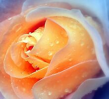 Raindrops On Roses by naturelover