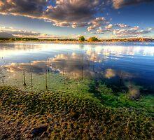 Slime Shore by Bob Larson