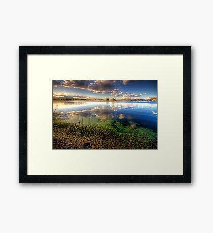 Slime Shore Framed Print