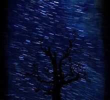 The Star Trail Experience - Silent Night by Matthew Jones