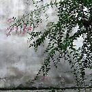 Blossom in Wu Zheng by Philomena