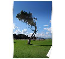 Saltwater Tree Poster