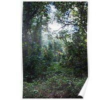Harrington Rainforest Poster