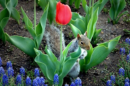 ~Secret Squirrel~ by a~m .