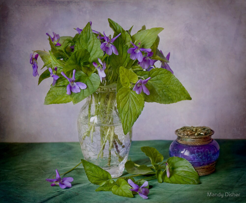Violets by Mandy Disher