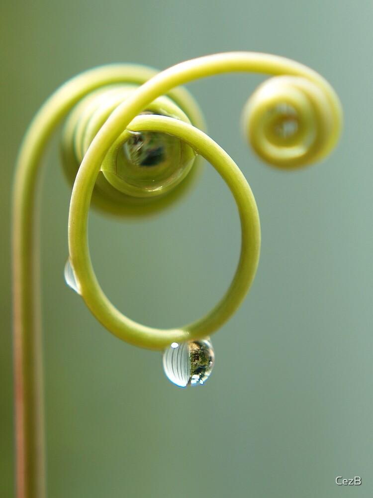 Raindrop by CezB