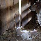 Newborns by Steven Squizzero