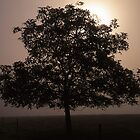 Chestnut Tree and a Misty Sunrise by Paul Mayall