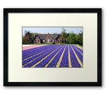 Hyacinths Framed Print