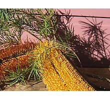 Yellow Banksia Flowers & Shadows on the Wall. Photographic Print