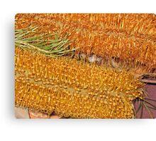 Orange and Yellow Banksia Flowers. Canvas Print