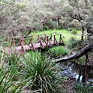 The Bridge to Tranquility, Sheba Dams, Nundle NSW by Bev Woodman