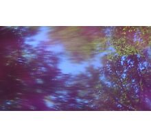 Back to the vivid forest n°5 Photographic Print