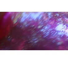 Back to the vivid forest n°6 Photographic Print