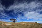 BIg sky  by Donovan Wilson