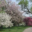 A Spring Walk by Linda Miller Gesualdo