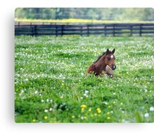 Nap time is over........ Metal Print