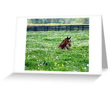Nap time is over........ Greeting Card