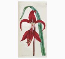 The Botanical magazine, or, Flower garden displayed by William Curtis V1 V2 1787 1789 0106 Amaryllis Formosissima, Cacobaen Amaryllis One Piece - Long Sleeve