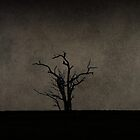 Lonely tree by James  Harvie