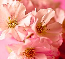 Blossoms in Bloom by Lucy Turner