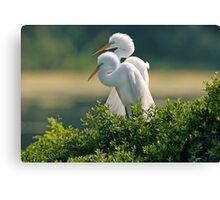 Happily Married Egrets Canvas Print
