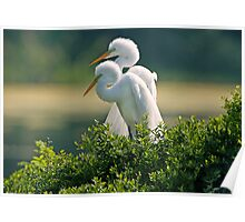 Happily Married Egrets Poster
