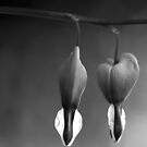 Bleeding Hearts by Anne Staub