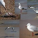 The Busy Life Of Mr Gershwin Gull by reflector