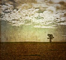 Do trees get lonely? by Carlos Restrepo