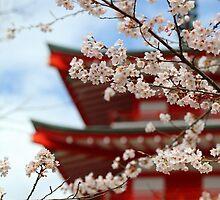 Cherry Blossom Season by 75tiks