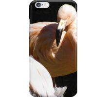 Chilean and Lesser Flamingos iPhone Case/Skin