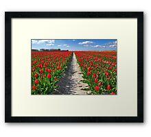 Tulips on Flakkee Framed Print