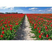 Tulips on Flakkee Photographic Print